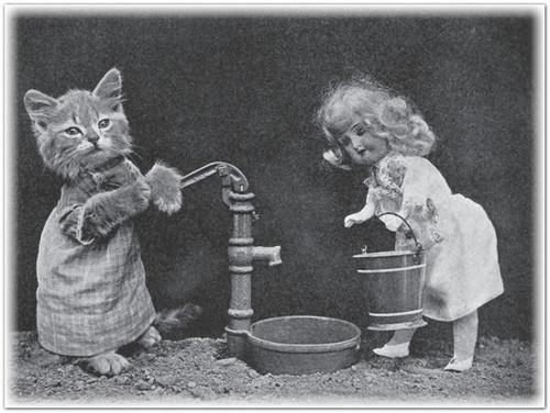 фотографировать кошек