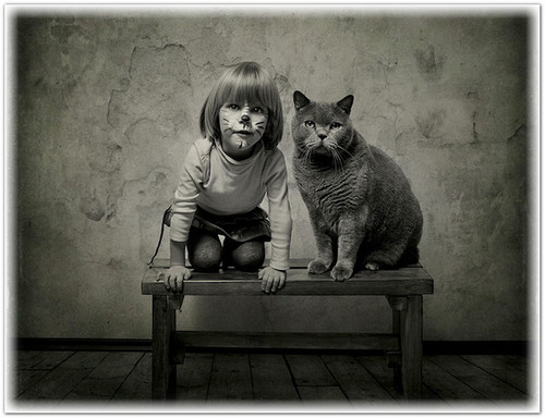 фотографируем кошек