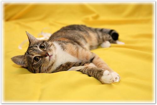 Как сфотографировать кошку
