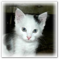 История кота Дозика