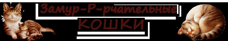 За-МУР-чательные кошки