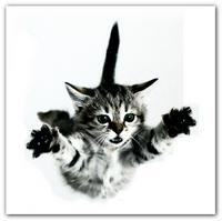 Девять жизней кошки  Падение кошки с высоты
