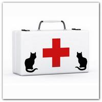Первая помощь кошке