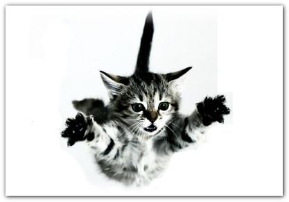 что делать если упала кошка