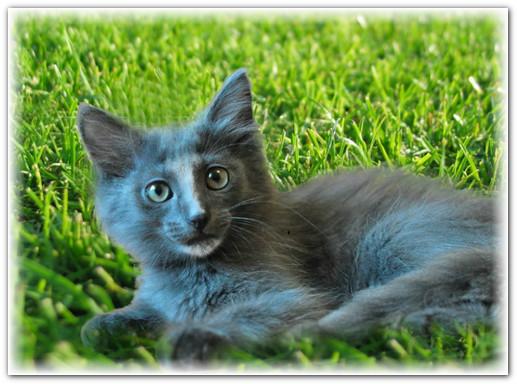 истории кошек