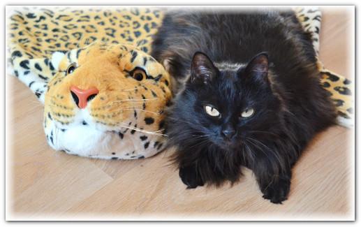 истории про котов и кошек