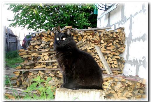 история черной кошки