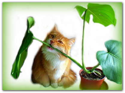 помощь при аллергии кошке стоп зуд