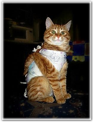 Почему в доме не уживаются коты и