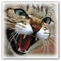агрессия у кошек.