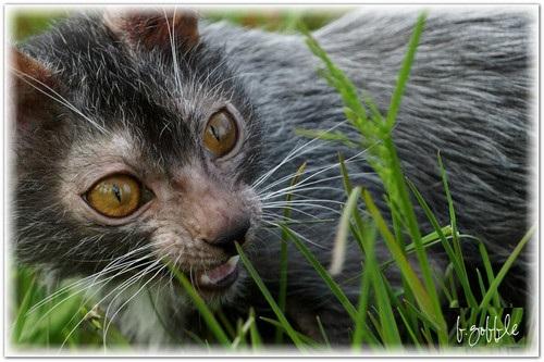 кошки оборотни