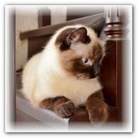 Уличная кошка Герда