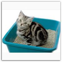как отучить кошку гадить (2)