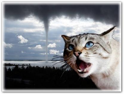 Шестое чувство у кошек (2)