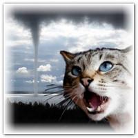 Шестое чувство у кошек