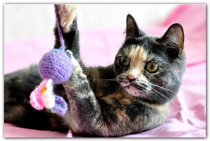 активная кошка