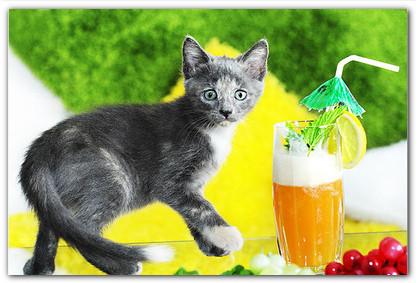кормить ли кошку сухим кормом