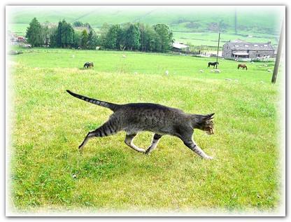 кошачья интуиция