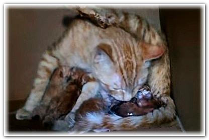 Как в домашних условиях помочь разродиться кошки 101