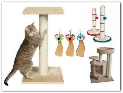 Почему кошка точит когти