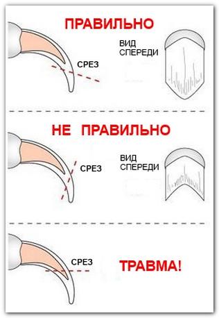 Как и чем подстричь когти коту в домашних условиях