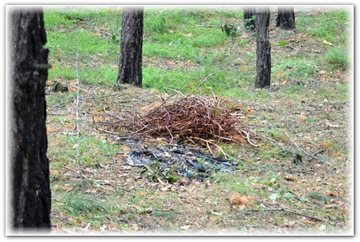 разбившееся гнездо