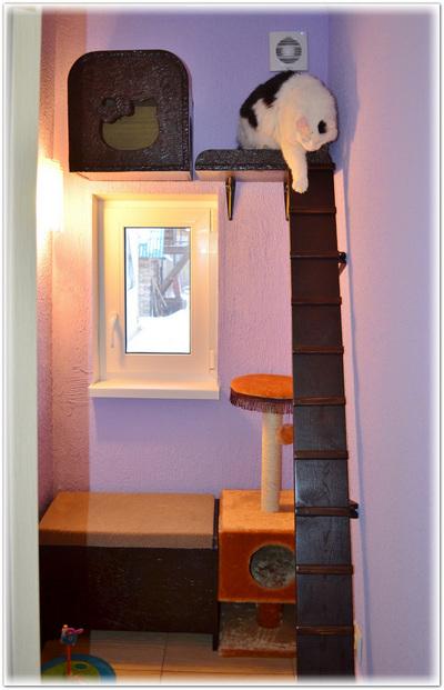 Гостиница Замурчательные кошки.