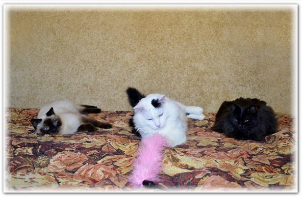 замурчательные кошки