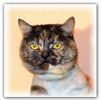 Кошка Чернышка в добрые руки