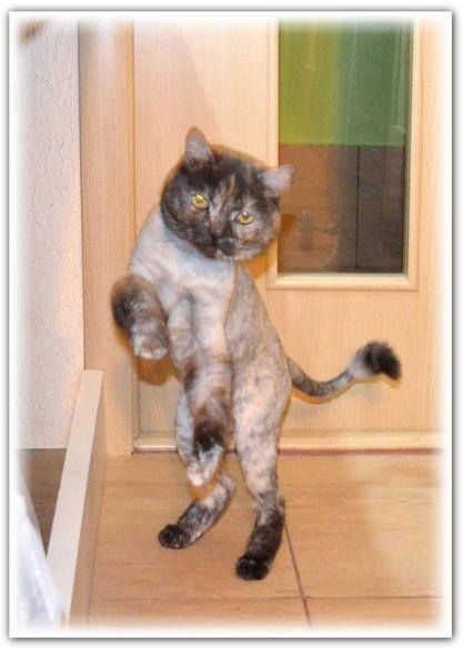 кошка в добрые руки Екатеринбург05