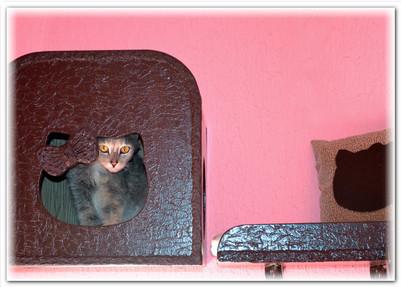 """Гостиница для кошек """"Замурчательные кошки"""""""