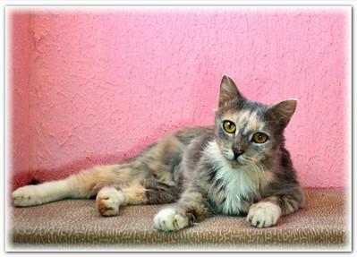 кошка в добрые руки Екатеринбург