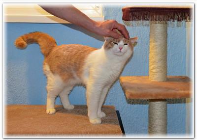 Гостиница Замурчательные кошки