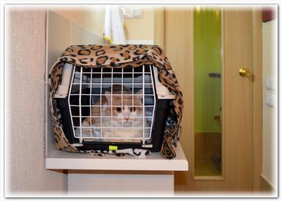 гостиница для животных заселение02