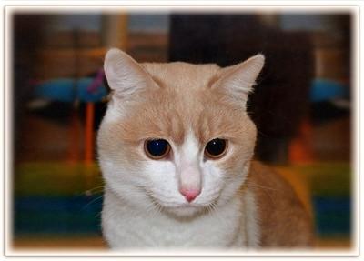 гостиница для кошек Замурчательные кошки