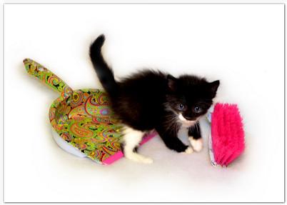 уборка помещения для животных