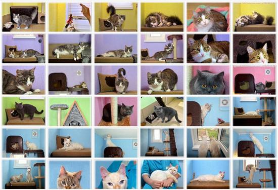 Гостиница для животных ЗаМУРчательные кошки