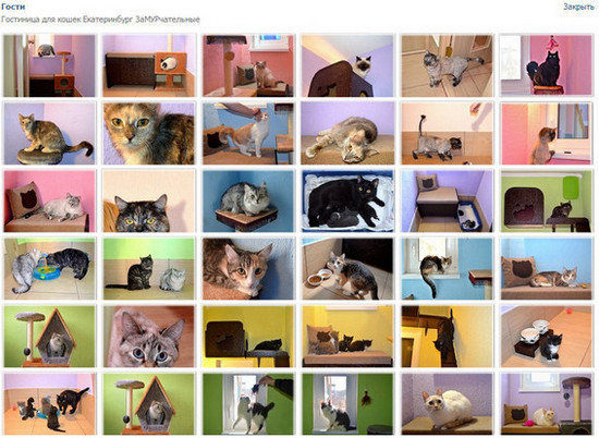 Гостиница для кошек Екатерибург