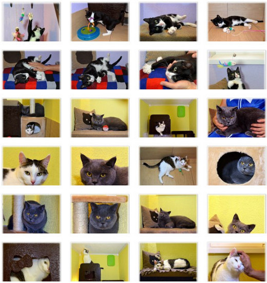 Гостиница для кошек Екатеринбург -3