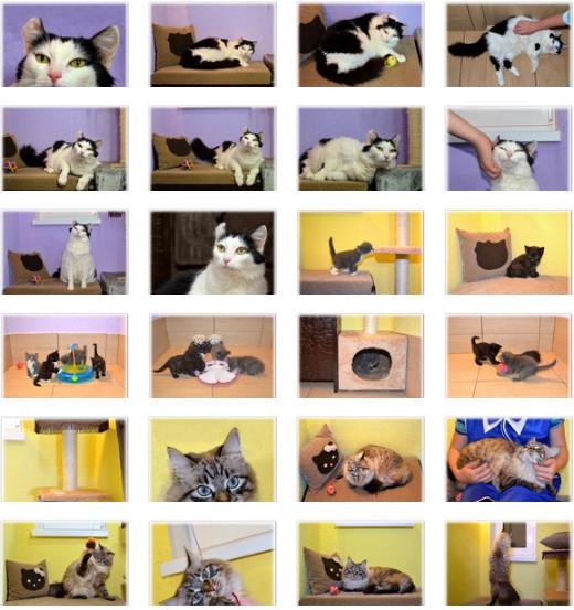Гостиница для кошек Екатеринбург -5