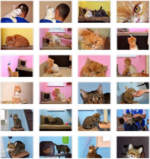 Гостиница для кошек ЗаМУРчательные кошки -4