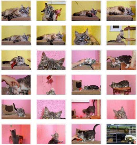 Гостиница для кошек ЗаМУРчательные кошки -6