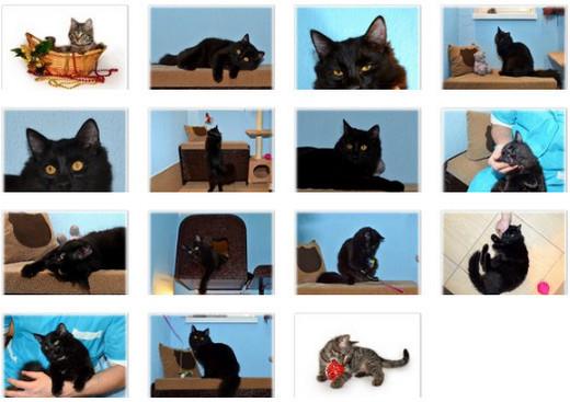 Гостиница для кошек ЗаМУРчательные кошки-9