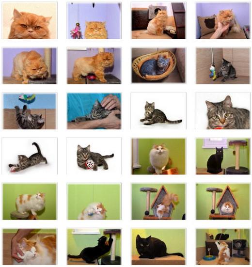 Гостиница для животнывх ЗаМУРчательные кошки -8