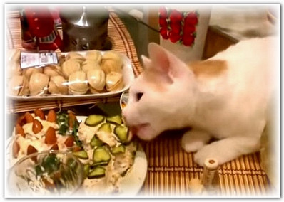 Как уберечь кошку в праздник06