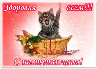 Как уберечь кошку в праздник